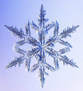 Real-Snowflakes-christmas-9447379-518-570